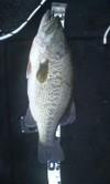 Bass064