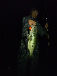 Bass_315