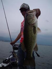 Bass_336_r