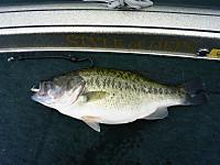 Bass_340