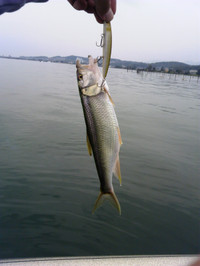 Bass_341