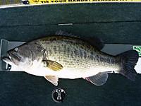 Bass_425