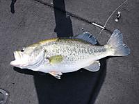 Bass_150