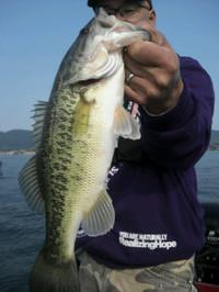 Bass_173