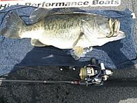 Bass_305