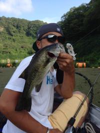 Bass_308