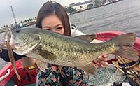 Bass_334