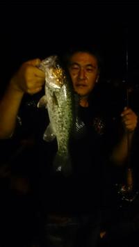 Bass_243