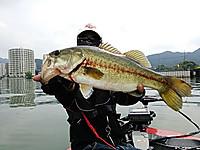 Bass_422