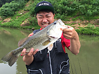Bass_461_r