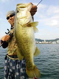 Bass_504