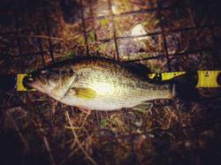 Bass_054