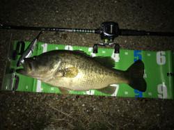 Bass_067