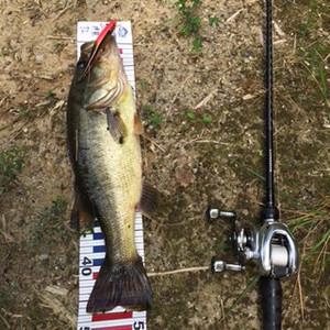 Bass_353