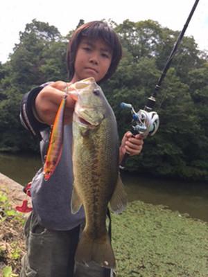Bass_355