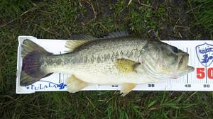 Bass031