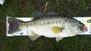 Bass_032