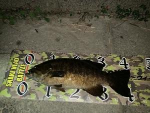 Bass-036_r